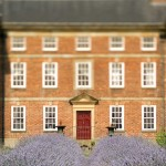 06 lavender path 1