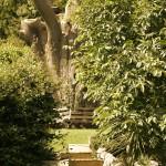 09 tree bench