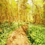 71 trevor woods 1