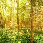 72 trevor woods 2